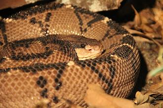 Photo: Noch mehr Schlangen?