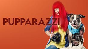 Pupparazzi thumbnail