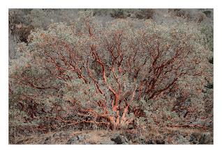 Photo: Eastern Sierras-20120717-806