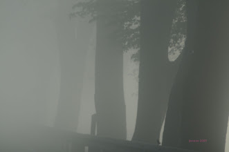 Photo: Allee im Nebel