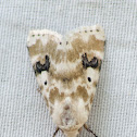 Goldenrod Flower Moth