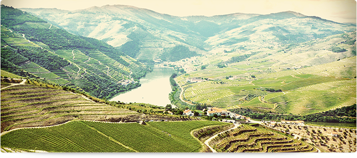 http://chefonline.continente.pt/sites/default/files/enologo/rv_douro_tras_montes.png
