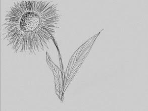 Photo: 046/366 - flower