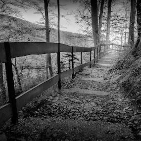 Down the Hill by Dražen Škrinjarić - Black & White Landscapes ( forest )