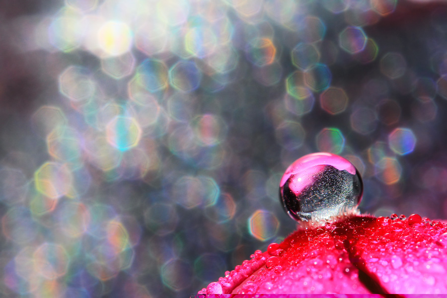 Deathless Beauty by Ahmad Soedarmawan - Nature Up Close Water