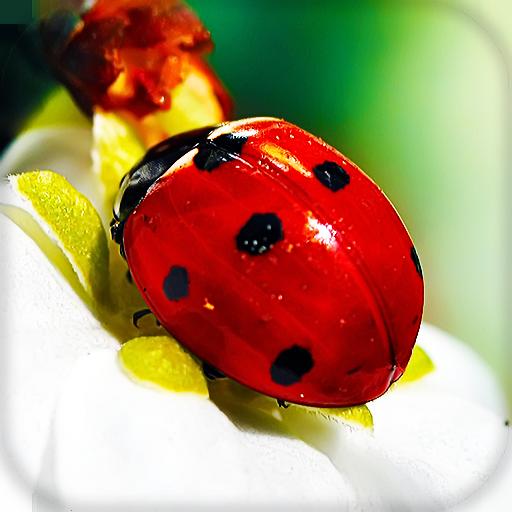 Ladybug Live Wallpaper Wallpapers Backgrounds Aplikacije Na