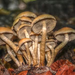 gljiv ipic2.jpg