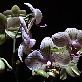 Dark Orchids by Fred Starkey - Nature Up Close Flowers - 2011-2013 ( orchid. high contast green purple black )