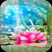 Magical Water Lotus LWP