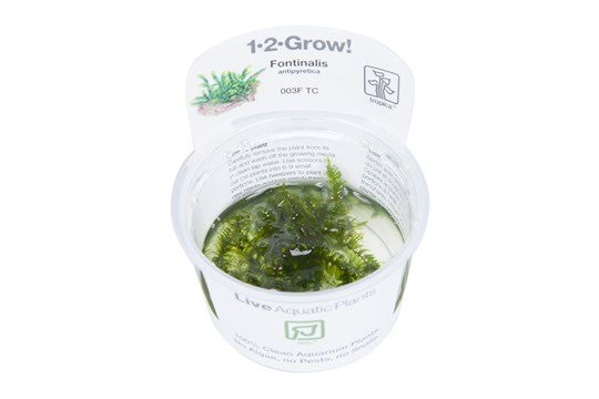 Akvarieväxter Tropica 1-2-Grow