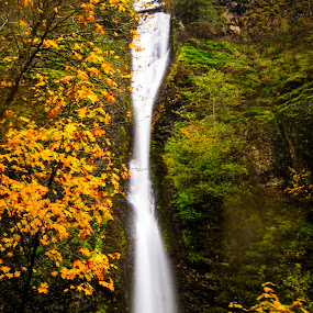 Eva is loading by Andrew Hale - Landscapes Forests ( oregon, fall, umbrella, waterfall, loading symbol )