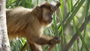 Monkey Garden thumbnail