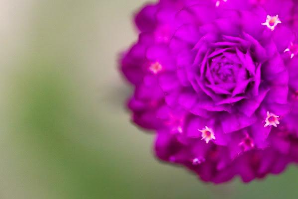 Purple di fasele72