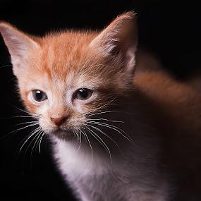 I see a mouse by Melanie Ayers Wells-Photography - Animals - Cats Portraits