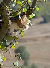 Photo: un dels dos gats de cal prat barrina, a castelltallat