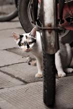 Photo: Bike Cat