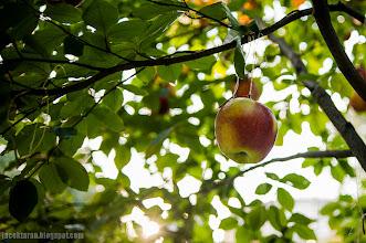 Photo: raj na plantach, cecylia malik, jacek taran;