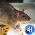 Rat Sounds Ringtones icon