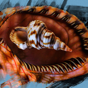 Sea Shell Photomerge by Dave Walters - Digital Art Things ( macro, nature, photomerge, lumix fz2500, digital art )