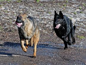 Photo: Luca og Lukas 6 mnd