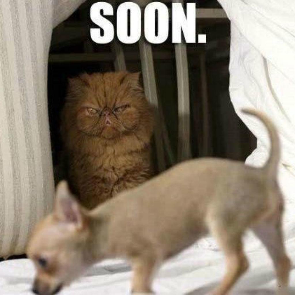 Plotting cat memes