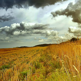 Peace by Angel Weller - Landscapes Prairies, Meadows & Fields ( grasses, clouds, grass, poppies, fields )