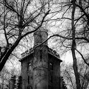 castle in the woods by Gabi Radoi - Black & White Landscapes ( beatiful, winter, sky, tree, black and white, forest, castle, woods )