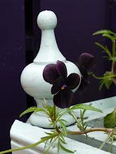Photo: Black pansies for garnish.
