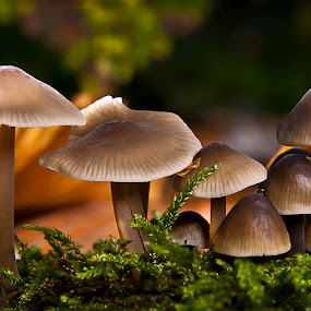 Fungi Family by Mark Shoesmith - Nature Up Close Mushrooms & Fungi ( fungi.nature, macro, green, leaves,  )