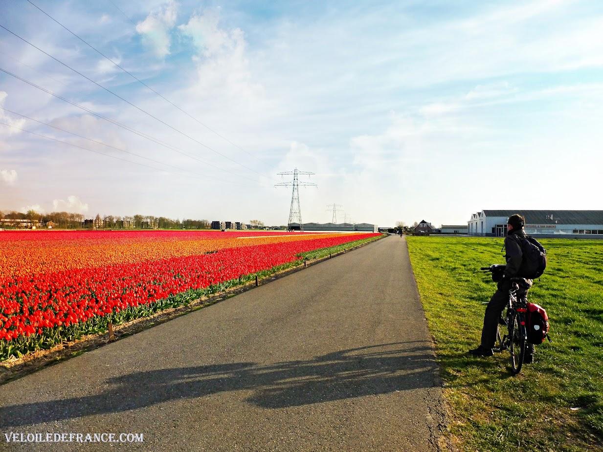 Admirer les champs de fleurs près de Keukenhof à vélo - Circuit à vélo aux Pays-Bas de Leiden au parc de Keukenhof par veloiledefrance.com