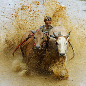 splashing mud by Romi Febrianto - Sports & Fitness Rodeo/Bull Riding