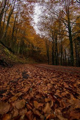 Foliage autunnale di selena_corsellini