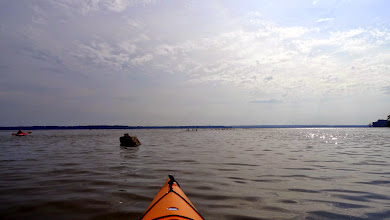 Photo: Open Water at Reelfoot Lake State Park