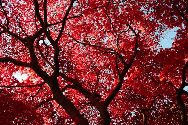 Autumn in Vancouver di be_valentines