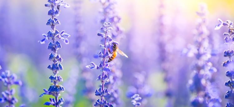 Plant a bee-friendly plants to transform your garden into a bee haven.