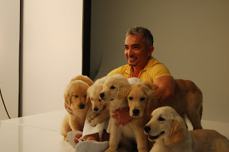 Photo: Our puppies at a photo shoot with Cesar Millan