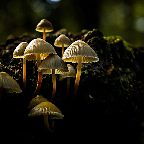 Living in the forest. by Miguel Silva - Nature Up Close Mushrooms & Fungi ( trunk, miguel silva, moss, nature up close, forest, viseu, portugal, fontelo, light, mushrooms,  )