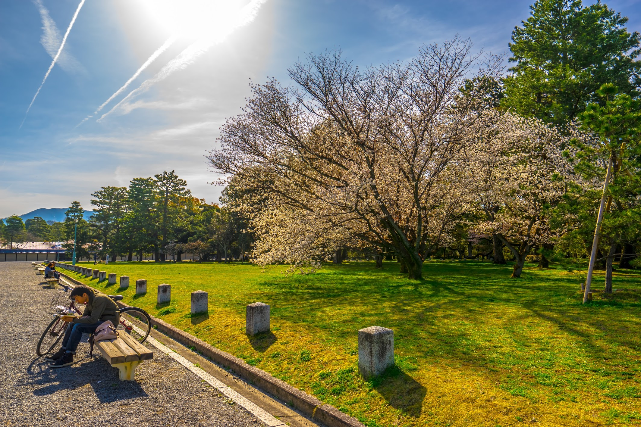 Kyoto gyoen Gakushuin cherry blossoms1