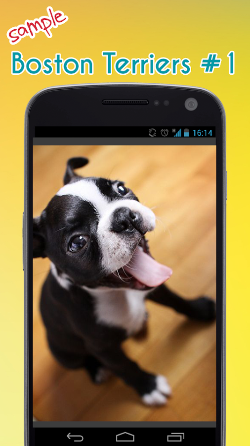 Dog Black Nose Phone Cover