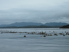 Photo: Foggy Bay