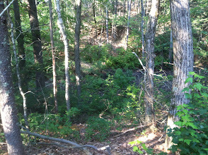 Photo: Behind one of the Juniors cabins, looking into the woods.