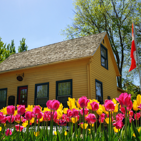 Magenta and Yellow by Darin Williams - City,  Street & Park  Street Scenes ( iowa, magenta, sky, flag, pella, blooms, green, trees, pink, yellow, house, tulips, flowers )