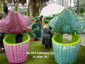Photo: ICPS Conference in Leiden (NL) 2010.