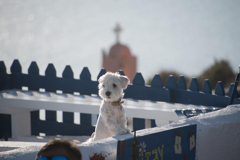 ...ma dove vuoi andare, che vivi a Santorini?... di zine21
