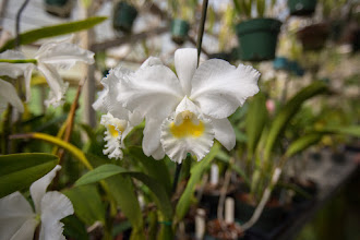 Photo: Orchid House in Wellborn