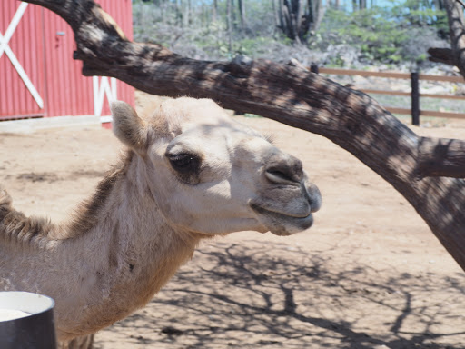 Philip's Animal Garden in Aruba has many animals that you can get close up to and even feed.