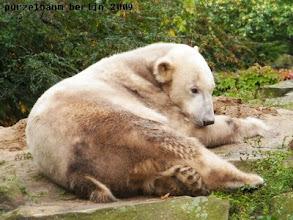 Photo: Ein ganz entspannter Knut :-)