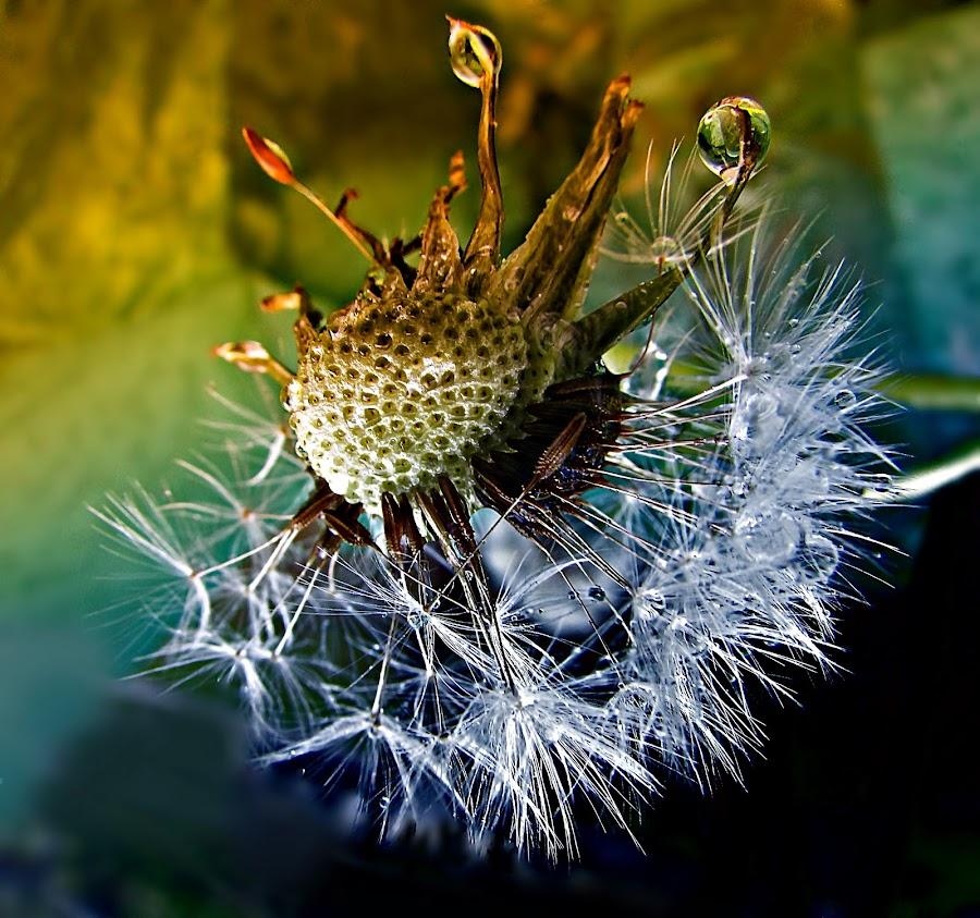 Awakening by Marija Jilek - Nature Up Close Natural Waterdrops