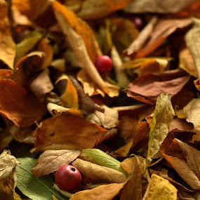 Fallen Leaves by Rafael Jatiaji - Nature Up Close Leaves & Grasses ( fruit, nature, tree, fall, leaves )