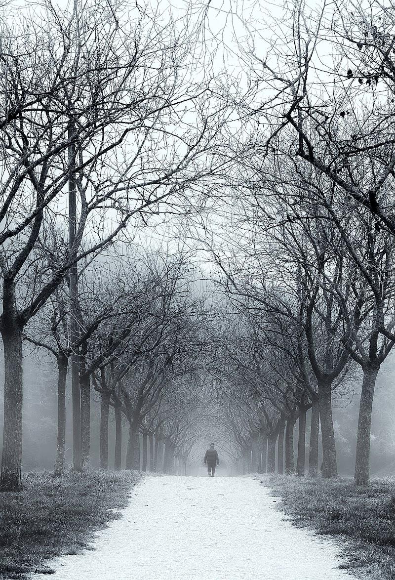 Passeggiando a Novembre.... di Franz78